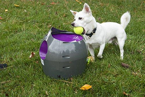 PetSafe Automatic Ball Launcher, Gray/Green/Purple
