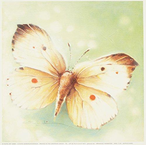 Eurographics AWA1124 wysokiej jakości druk artystyczny, Arkadiusz Warminski, Anthocharis 18 x 18 cm