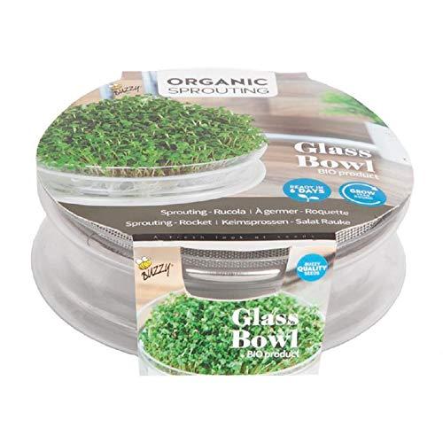 BIO Sprossen Glasschale mit Edelstahlgitter - Frei von Aluminium - Sprossenglasschale im Set mit Edelstahlgitter inkl. 6 g Sprossen 'Salat Rauke' - Keimschalen für Sprossen - Sprouting