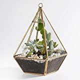 Newitty Hanging Geometric Teardrop-Shaped Glass Plant Terrarium for Succulent Air Plants Moss Fern Cactus, Gold (NWT-002)