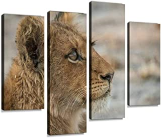 Side profile of a Lion cub looking up in the Kruger National Park, Canvas Print Artwork Wall Art Pictures Framed Digital P...