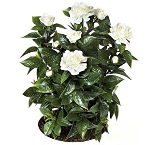 SilksAreForever 24″ UV-Proof Outdoor Artificial Gardenia Flower Bush -White (Pack of 4)