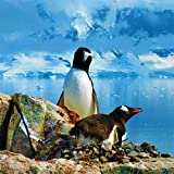 Penguin & Ocean Sound: Waves Antarctic in North Pole