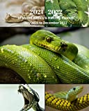 2021 -2022 18 Month Weekly and Monthly Planner July 2021 to December 2022: Snake Collage - Monthly Calendar with U.S./UK/ ... Reptiles & Amphibian Animal Nature Wildlife
