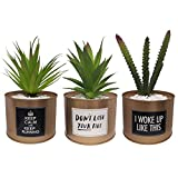 *SAJANDA Plantes Suculentes Artificials en Test Daurades, 3 Peces Plantes Artificials en Tests, Plantes Artificials Petites, Plantes Artificials Decoratives Interior (Tipus 1)