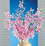 XOXO Set of 3 Springtime Artificial Pink Forsythia Bushes