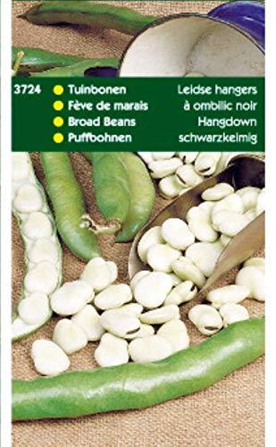 5 stuks Tuinbonen Leidse Hangers 250 gram