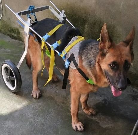 "Adjustable Dog Pet Wheelchair, Hind Legs Rehabilitation, 7 Sizes (0-110lbs), Dog Cart,Wheels (6. Hip Height 22'-26.8"", Weight:44-110lbs)"