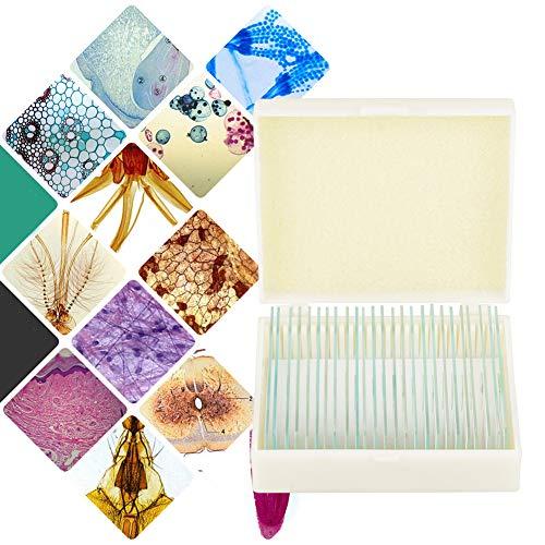 Laborproben 25 Stück Genau gefärbtes, sorgfältig beschriftetes Objektträger-Set für Schulglas mit Box