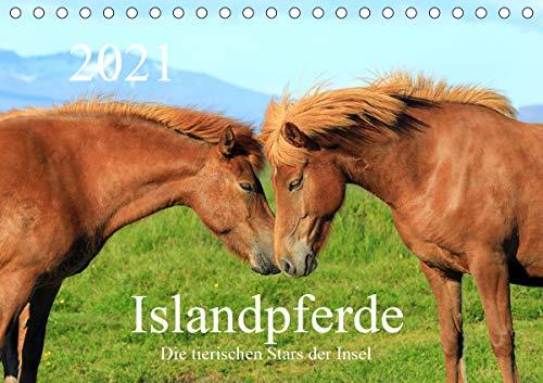 Islandpferde - Die tierischen Stars der Insel (Tischkalender 2021 DIN A5 quer)