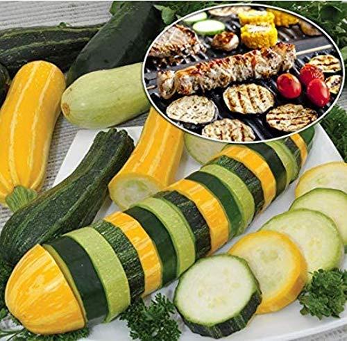 SeedsMarket- Bio Zucchini Seeds 50pcs Zucchini cucurbita Vegetable Seeds Perennial Vegetable Seeds for Balcony/Terrace/Garden