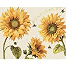 Paint by Numbers for Adults & Kids DIY Acrylic Painting on Canvas Color by Number Kit Family Paint Night Kit for Home Wall Decoration Sunflowers (No Frame)