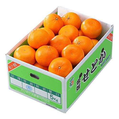 みかん せとか 〇等級 4L〜Lサイズ 5kg 愛媛県 中島産 ミカン 蜜柑 ギフト 贈り物