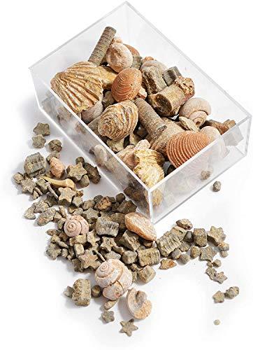 Namvo Caja de fósiles y roca para educación geológica escolar, regalo para niños