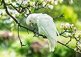 LANA KK - Premium Poster Papagei Weiß Tiere & Natur
