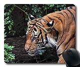 Fotografía Animal Divertida del ratón, fotografía Animal Enojada del Animal, Cojines de ratón del Tigre