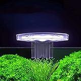 WDSZXH Clip mini impermeable de luz de acuario sumergible DIRIGIÓ Acuario LIGHT 5W Plantas acuáticas Cultivar Plantas de lámpara Cultivar Lámpara de clip a prueba de agua a prueba de agua para el tanq