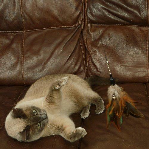 The Natural Pet Company Interaktives Katzenspielzeug mit Federn, inkl. 2 Ersatzfedern - 3