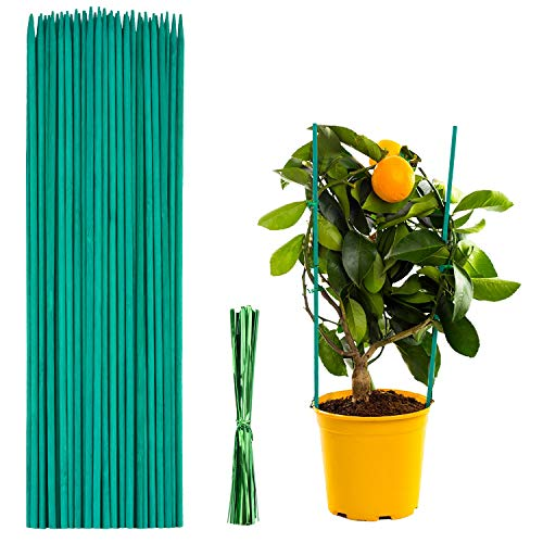 Pflanzenstützen 50 Stück,Pflanzstab Bambus 38 cm,Pflanzenstäbe,Grüne BlumenstäBchen BambusstäBe mit 50 Stück Metallischen Bindebändern,für Haus Garten Kletterpflanze Erweiterung der Pflanzenstütze