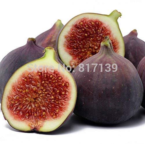 Ficus Carica Figue Graines darbres fruitiers Livraison gratuite 100/graines/?/M/élange d 9kinds
