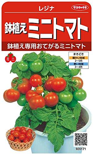 サカタのタネ 実咲野菜0171 鉢植えミニトマト レジナ 00920171
