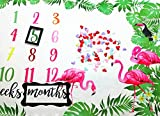Baby Monthly Milestone Blanket, 40×60 Inches Infant First Year Pink Flamingo Milestone Blanket, Flannel Fleece, Photography Backdrop Photo Prop for Boy Girl