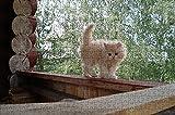 LHJOY Puzzle niño 10000 Piezas Gatito, Gato, Animal Esponjoso Regalo de cumpleaños 75x50cm