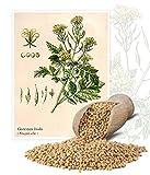 Mostaza blanca de consumo - 1 kg - 130000 semillas