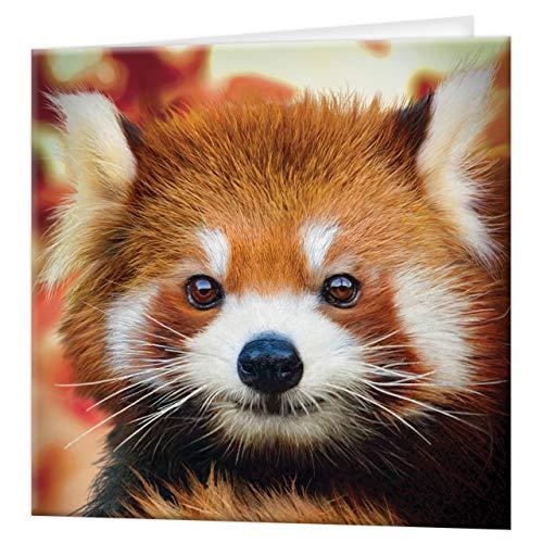tarjeta de felicitación de 3D LiveLife - panda roja del bebé, tarjeta colorida de Panda Lenticular 3D de Deluxebase, para cualquier ocasión y edad. ¡Ilustraciones originales autorizadas del artista re