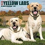 Just Yellow Labs 2021 Wall Calendar (Dog Breed Calendar)