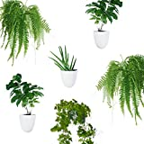 Set of 6 Round Wall Planters - Lightweight and Easy To Install - Design Your Own Vertical Garden - Melamine Plastic