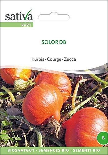 Sativa Rheinau kü21 Kürbis Solor Db (Bio-Kürbissamen)