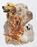 Golden Retriever with Ghost Image by Barbara Keith Art Print, 10 x 12 inches
