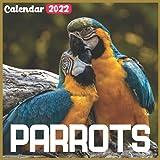 Parrots Calendar 2022: Official Bears Calendar 2022, 18 Month Photo of Cute Bear calendar 2022, Mini Calendar