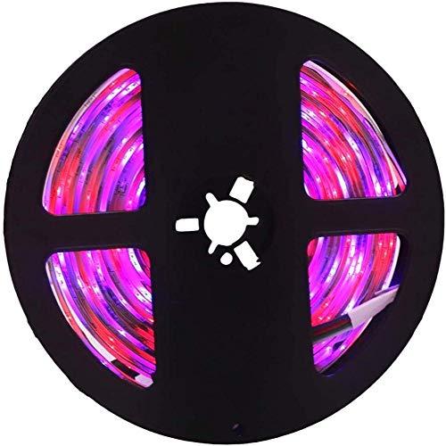 FANPING LED-Lichtleiste IP65 wasserdicht 300led 5M 3528 SMD RGB Flexible DC 12V LED-Hauptdekoration-Licht-Streifen-Licht-Streifen, for Festivals Monitore Schaufenster und Geschäfte (Color : Rgb)