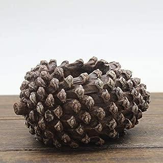 pine cone succulent planter