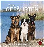 Hunde - Treue Gefährten Postkartenkalender 2021 - Kalender mit perforierten Postkarten - zum Aufstellen und Aufhängen - mit Monatskalendarium - Format 16 x 17 cm