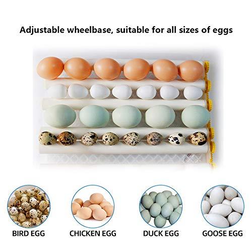 InLoveArts digital Ei-Inkubator 16 Eier Automatischer Brutapparat für den Heimgebrauch, Temperaturregelung und automatisches Drehen für mehrere Eigrößen - 2