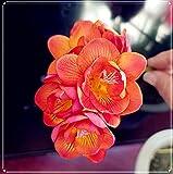 Fresias Planta, Actualmente a La Venta,Plantación De Jardines,Plantación De Macizos De Flores, Postura Elegante, Flores Hermosas, Muy Popular Entre Los Consumidores-A,10 Bulbos