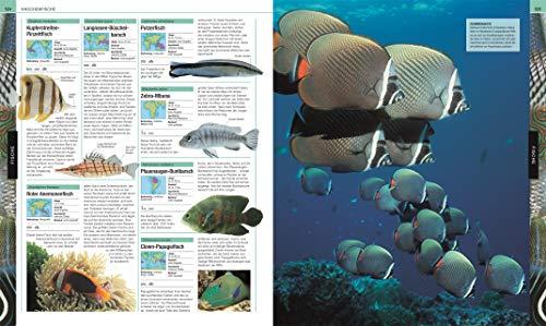 Tiere: Die große Bild-Enzyklopädie mit über 2.000 Arten - 8