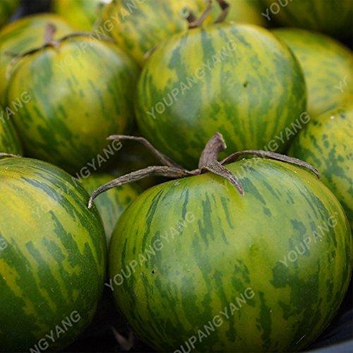 100pcs / bag rares beefsteak Graines de tomate bricolage nourrissants bonsaïs de légumes pour jardin vivaces Plantes d'extérieur Vert clair