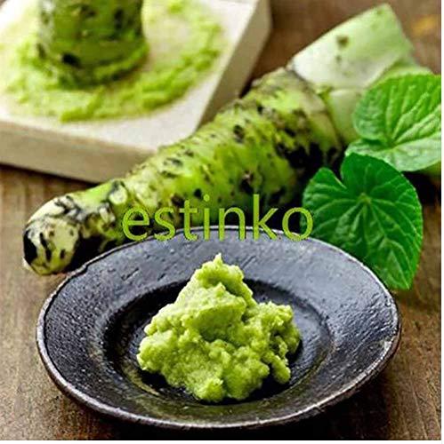 MIYU 100 Semillas Semillas Semillas de Wasabi de rábano Picante japonés Vegetales Plantas Wasabia japónica Inicio Jardín Bonsai