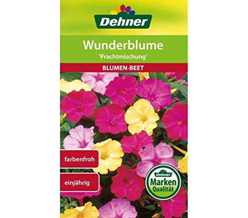 Dehner Blumen-Saatgut, Wunderblume