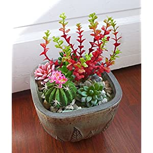 The 6 Artificial Ball of Cactus Plant Flowering with Succulent Grass