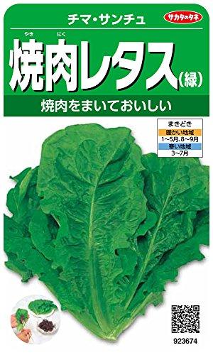 サカタのタネ 実咲野菜3674 焼肉レタス(緑) チマ・サンチュ 00923674