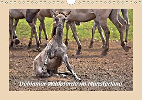 Dülmener Wildpferde im Münsterland (Wandkalender 2021 DIN A4 quer)