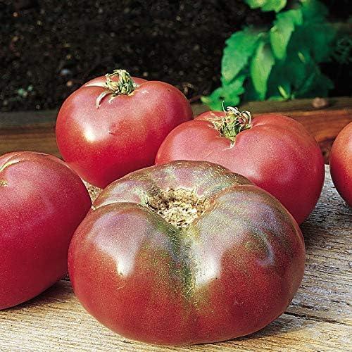 Burpee Cherokee Purple Heirloom Large Slicing Tomato Rich Flavor 50 Seeds product image