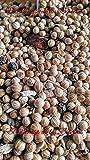 Especias Caracoles 1000 grs - Caracoles 1 Kg