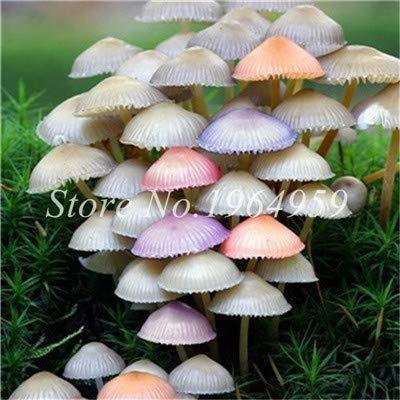 Bloom Green Co. Happy Plants Farm 50 Pcs/Sac champignons Graines de plantes mélangées Succlent champignons comestibles légumes de santé Graines: 11