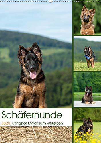 Schäferhunde Langstockhaar zum verlieben (Wandkalender 2020 DIN A2 hoch): Langhaar Schäferhunde...